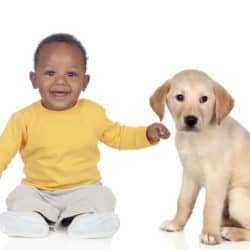 Cute african baby with a nice puppy dog isolated on a white back